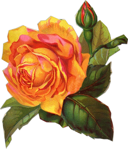 http://blackwidow12.files.wordpress.com/2013/07/yellow-rose-sil-si-edu-inconstant-beauty.png?w=529