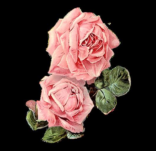 Pink Rose Pair